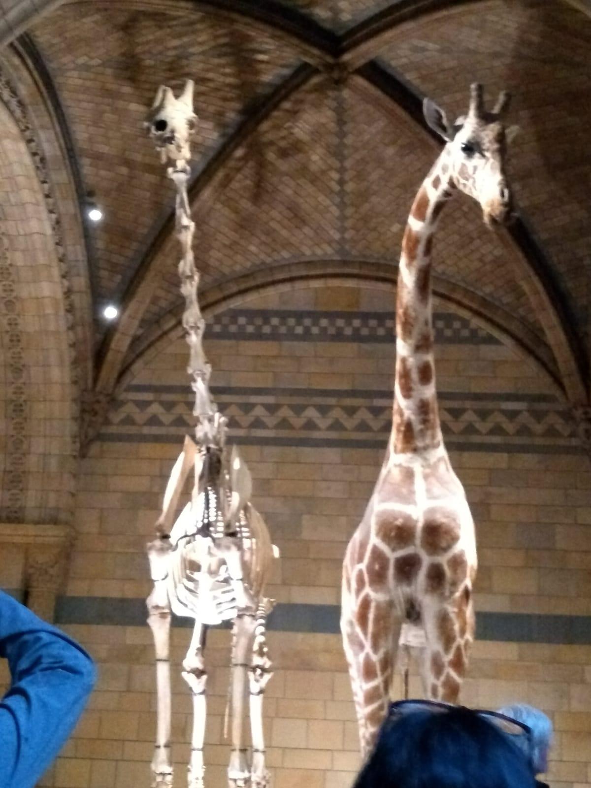 viel zu sehen im national history museum london für kinder